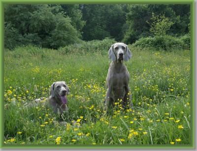 508sized_Darcy en June in de gele bloemetjesDarcy13 mei 2008Prioriteit lensopening