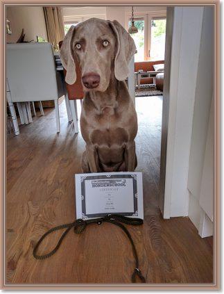 sized_EG diploma Puk